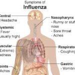 Natural Immune & Stress Support for FLU Season